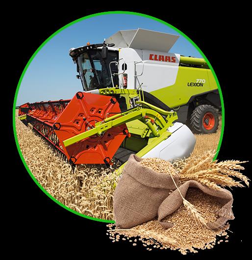 Helga Pleven harvesting wheat