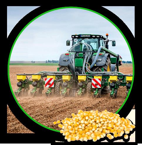 Helga sowing corn